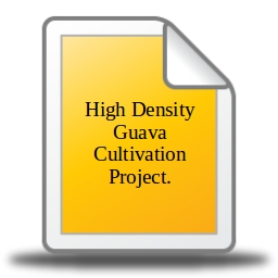 High Density Guava Cultivation Project  - Aditya NGO Consultancy